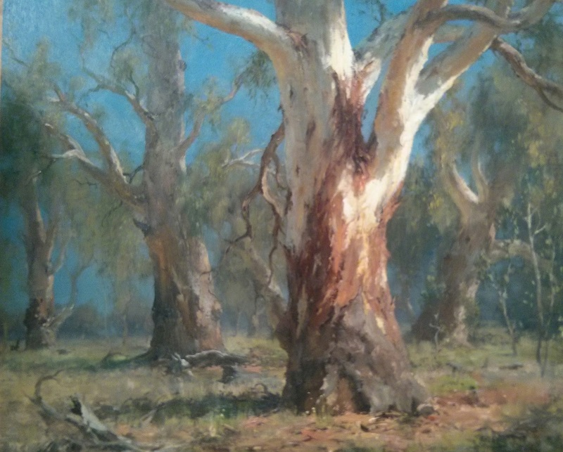 River Red Gums Forbes (65x45cm)