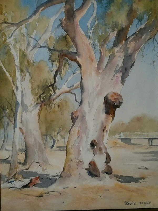 Old Red Gum Forbes (30x40cm) wc